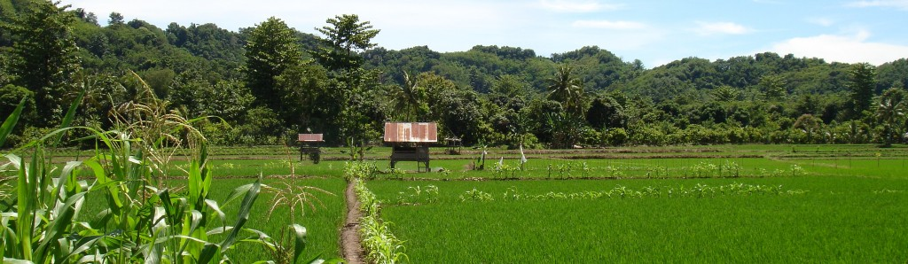 Rice_EastSulawesi