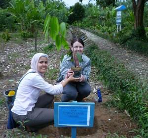 cocoa_tree_planting